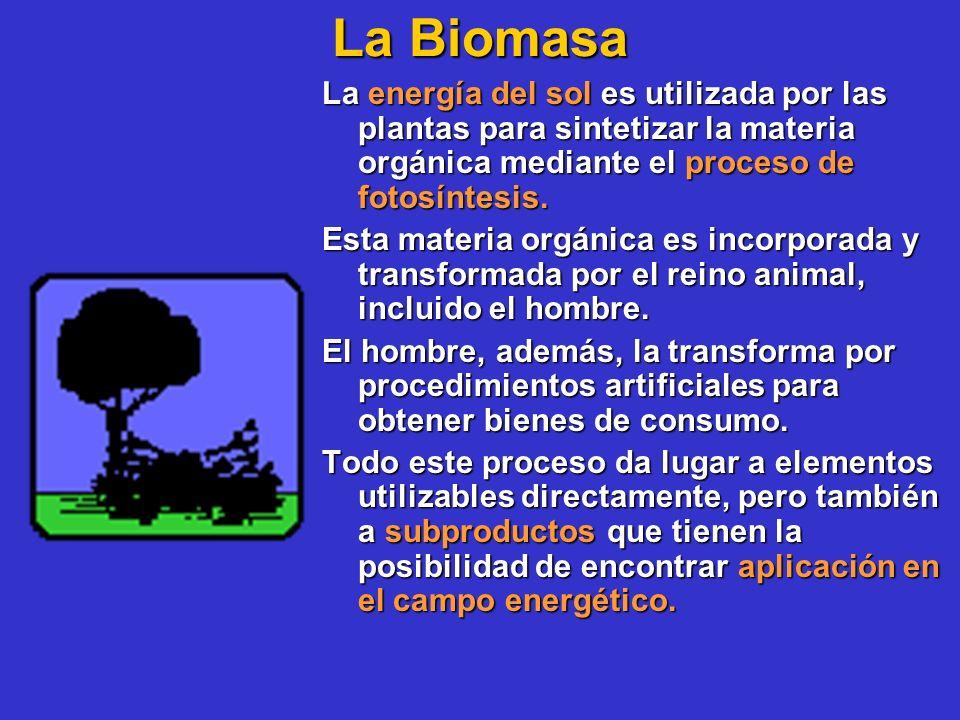 La Biomasa La energía del sol es utilizada por las plantas para sintetizar la materia orgánica mediante el proceso de fotosíntesis. Esta materia orgán