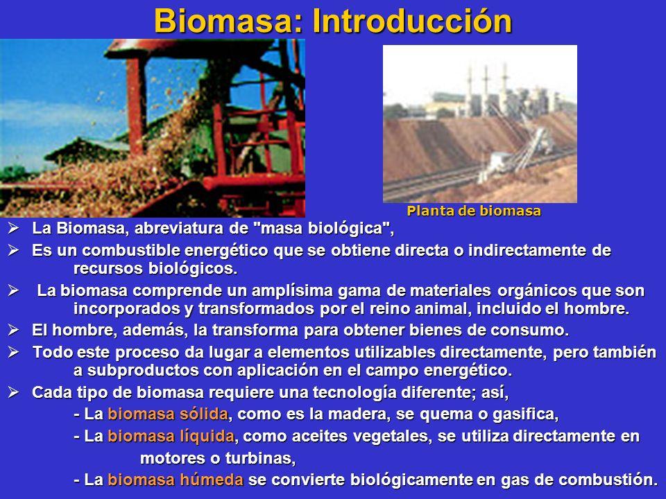 Biomasa: Introducción La Biomasa, abreviatura de