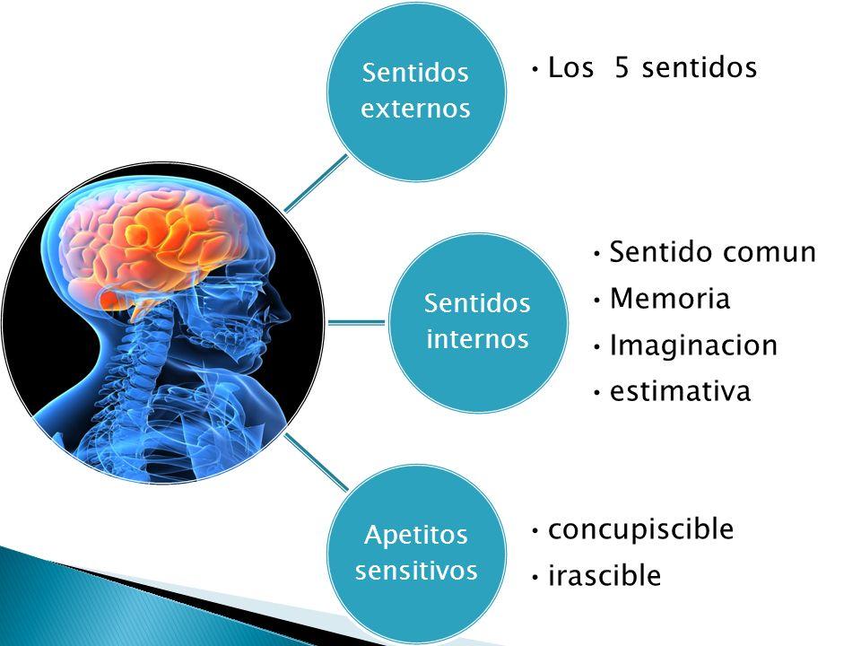 Sentidos externos Los 5 sentidos Sentidos internos Sentido comun Memoria Imaginacion estimativa Apetitos sensitivos concupiscible irascible