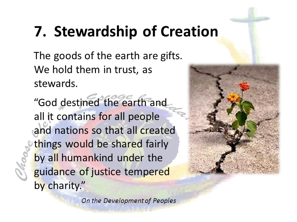 7. Stewardship of Creation The goods of the earth are gifts.