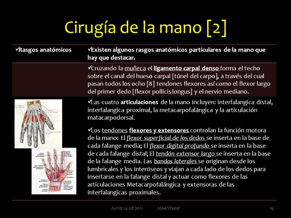 Cirugía de la mano [2] Junio 14-28 2011 Jose Wazar19 Rasgos anatómicos Existen algunos rasgos anatómicos particulares de la mano que hay que destacar.