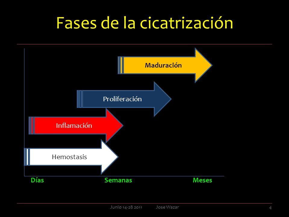 Fases de la cicatrización FasesLa cicatrización posee tres fases predecibles, superpuestas, y bien definidas, y por demás simultaneas, que dese ahora conoceremos como primera fase, fase primaria o fase inflamatoria, segunda fase, fase intermedia o fase proliferativa y, tercera fase, fase tardía, o fase de remodelación.