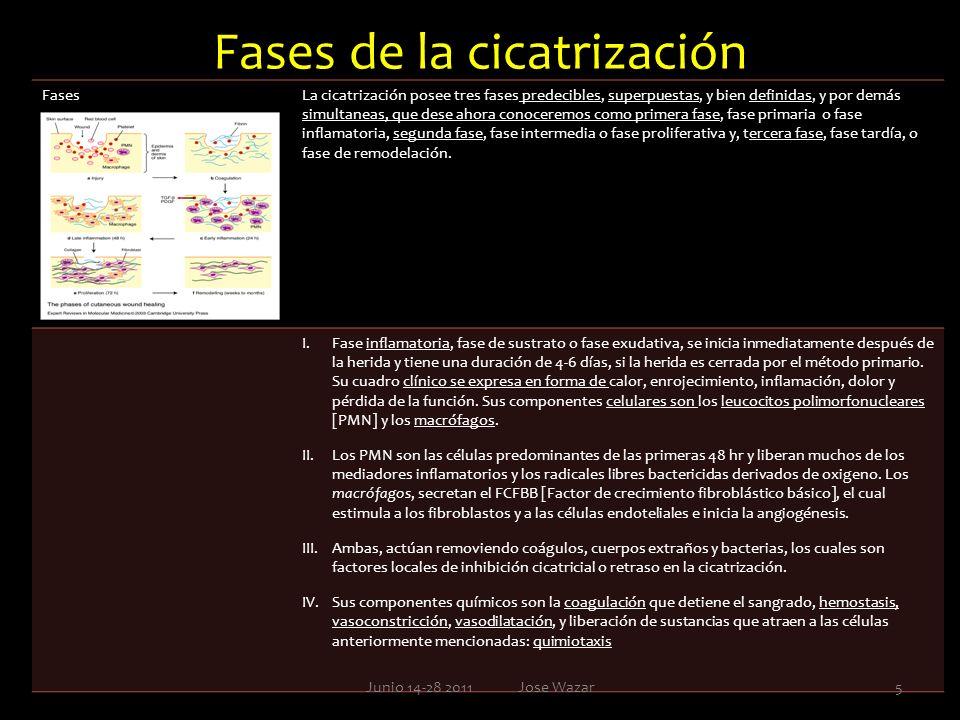 Fases de la cicatrización FasesLa cicatrización posee tres fases predecibles, superpuestas, y bien definidas, y por demás simultaneas, que dese ahora