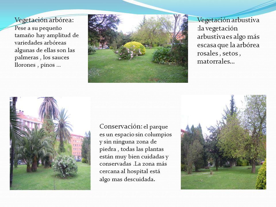 Vegetación arbórea: Pese a su pequeño tamaño hay amplitud de variedades arbóreas algunas de ellas son las palmeras, los sauces llorones, pinos … Veget