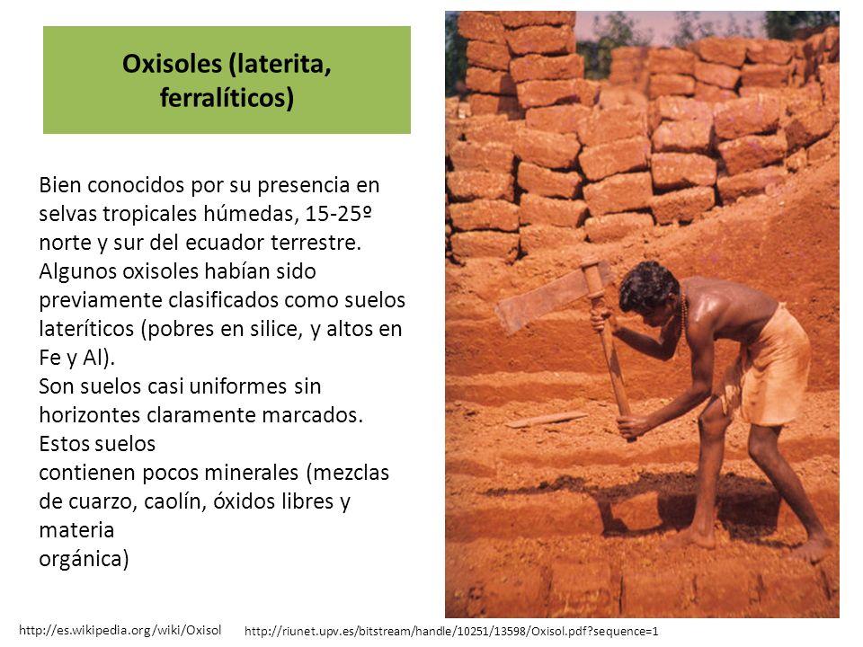 La mayor parte de los Oxisoles están dedicados a ganadería extensiva o a cultivos itinerantes, a pesar de tener muchos de ellos excelentes propiedades físicas y adecuada topografía para la producción intensiva de cultivos.