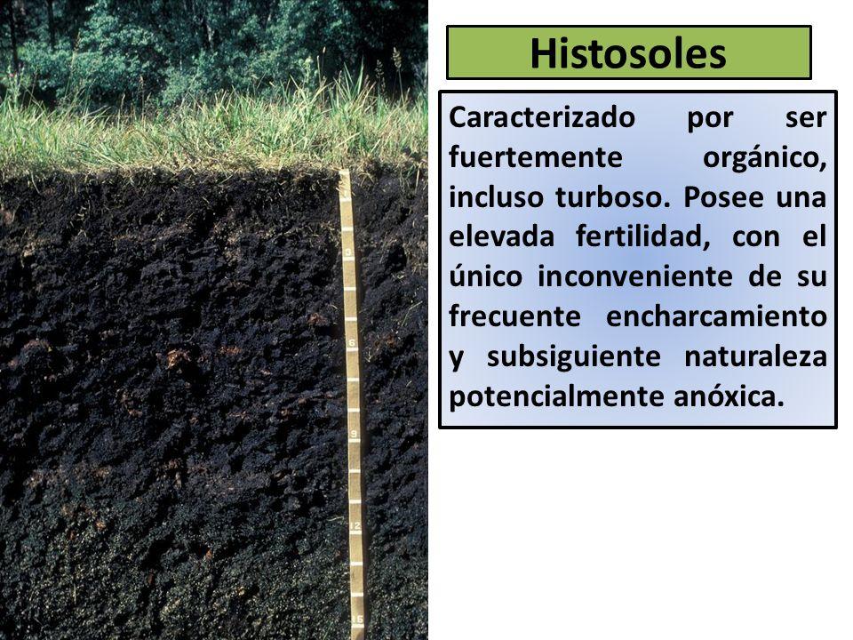 Histosoles Caracterizado por ser fuertemente orgánico, incluso turboso.