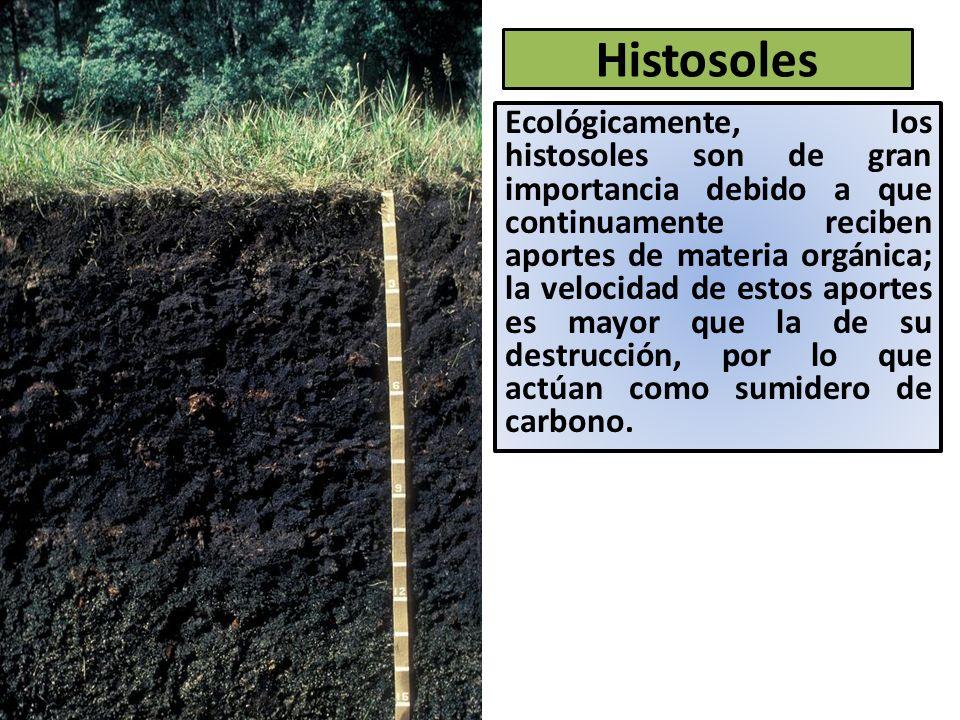 Histosoles Ecológicamente, los histosoles son de gran importancia debido a que continuamente reciben aportes de materia orgánica; la velocidad de estos aportes es mayor que la de su destrucción, por lo que actúan como sumidero de carbono.