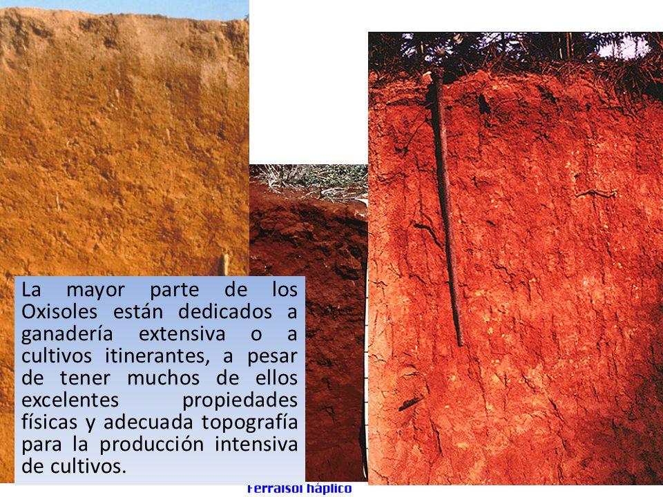 Spodosol Acumulación subsuperficial de humus y óxidos de Al y Fe translocados.