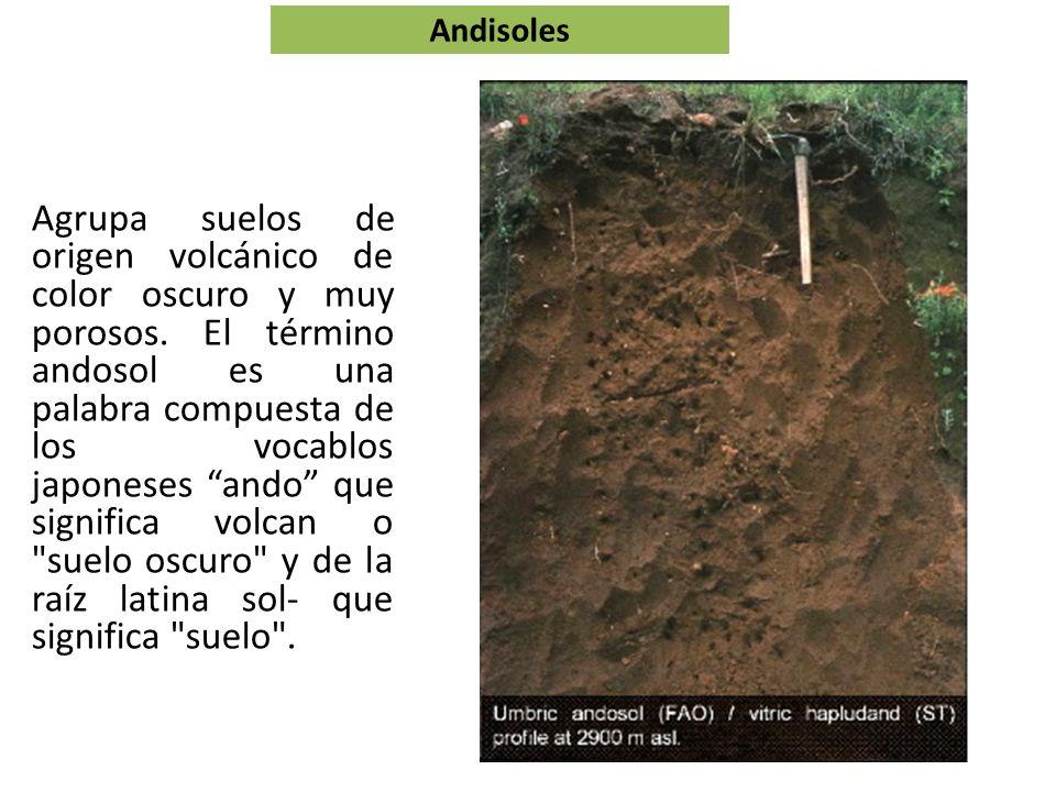 Andosoles