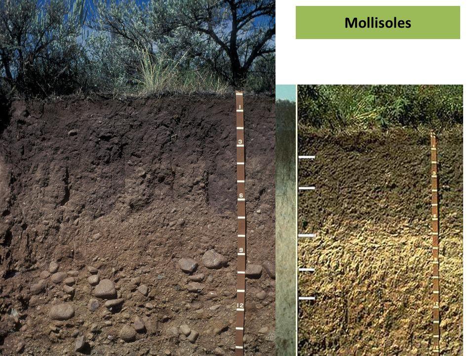 Mollisoles