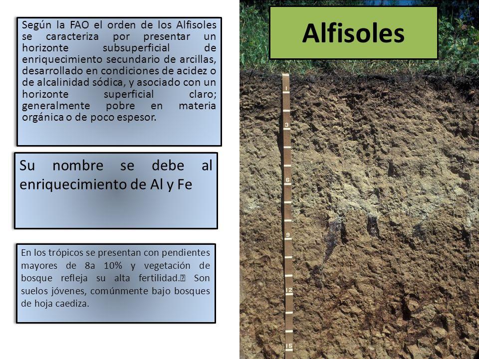 El clima característico donde este tipo de suelo se ha formado es subhúmedo a semiárido, con precipitaciones inferiores a 800 – 900 mm/año, los cuales definen regimenes ústicos con déficit hídrico de mas de 5 meses.
