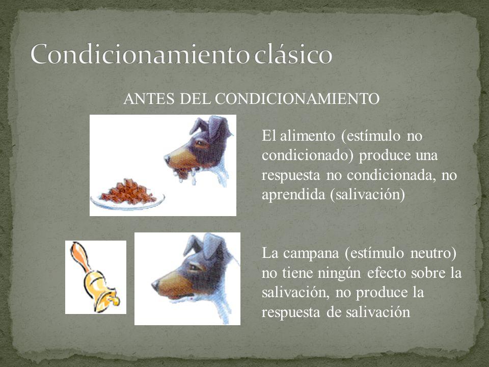 ANTES DEL CONDICIONAMIENTO El alimento (estímulo no condicionado) produce una respuesta no condicionada, no aprendida (salivación) La campana (estímulo neutro) no tiene ningún efecto sobre la salivación, no produce la respuesta de salivación