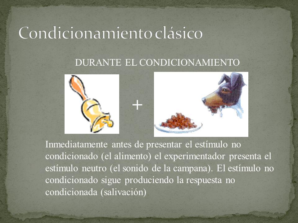 DURANTE EL CONDICIONAMIENTO Inmediatamente antes de presentar el estímulo no condicionado (el alimento) el experimentador presenta el estímulo neutro (el sonido de la campana).