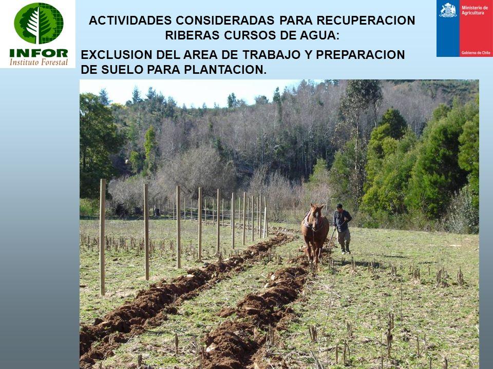 ACTIVIDADES CONSIDERADAS PARA RECUPERACION RIBERAS CURSOS DE AGUA: EXCLUSION DEL AREA DE TRABAJO Y PREPARACION DE SUELO PARA PLANTACION.