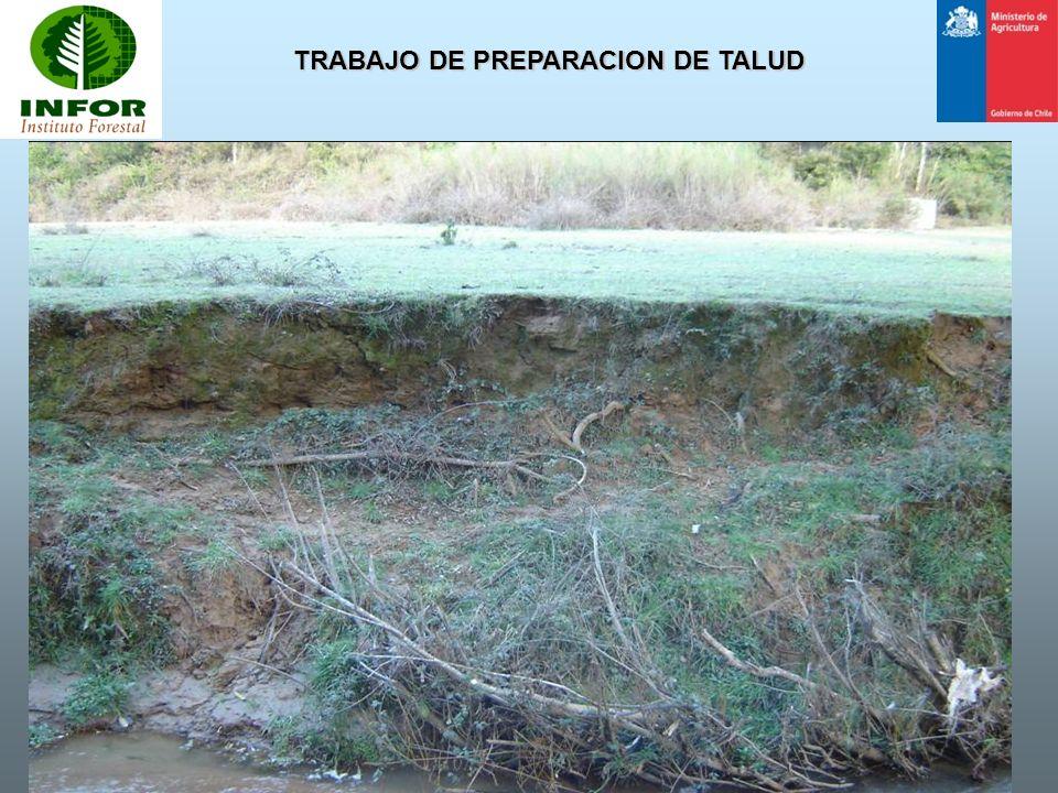 TRABAJO DE PREPARACION DE TALUD