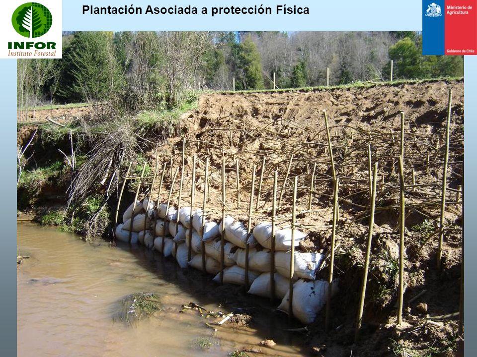 Plantación Asociada a protección Física