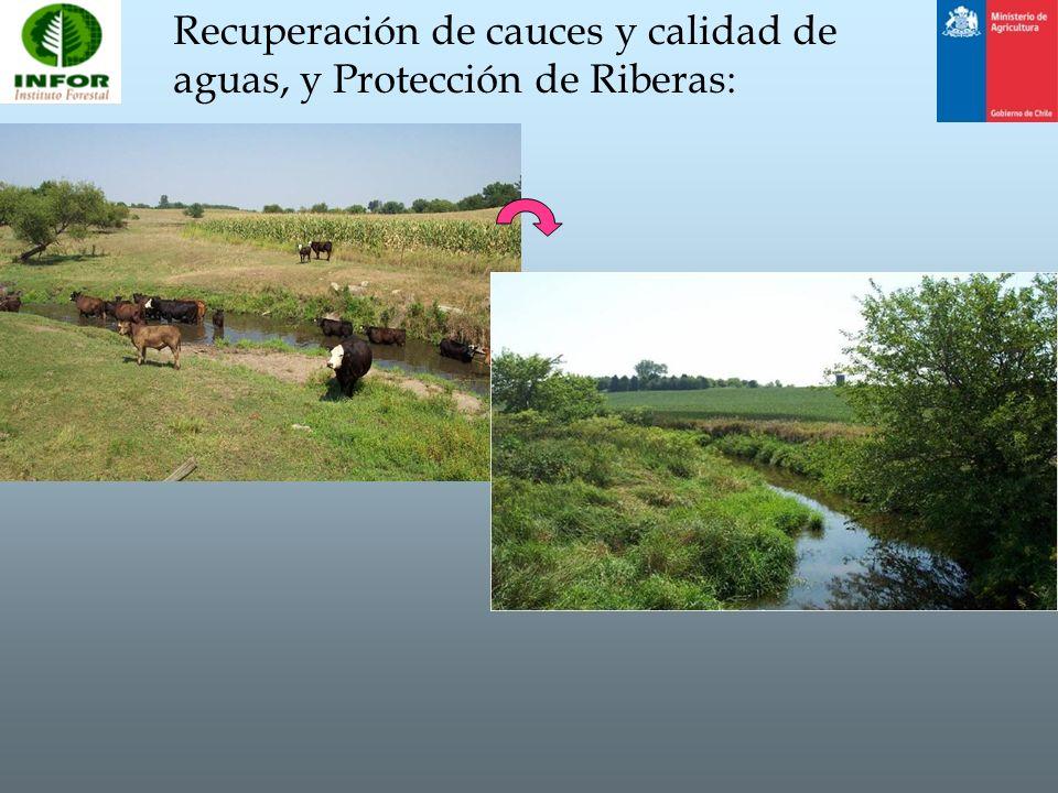 Recuperación de cauces y calidad de aguas, y Protección de Riberas: