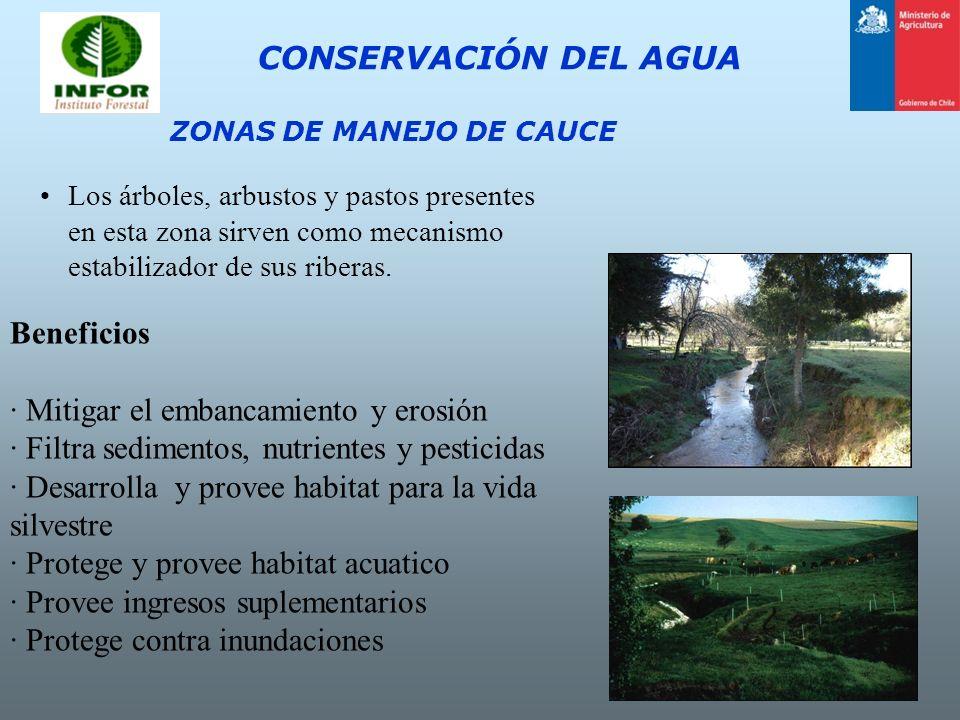 CONSERVACIÓN DEL AGUA ZONAS DE MANEJO DE CAUCE Los árboles, arbustos y pastos presentes en esta zona sirven como mecanismo estabilizador de sus ribera