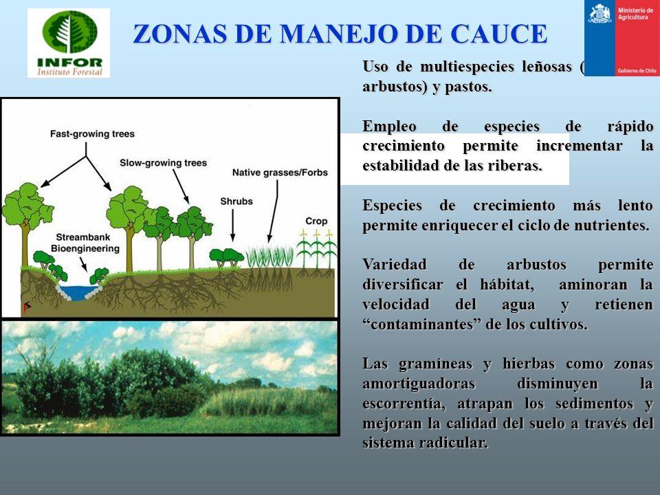 ZONAS DE MANEJO DE CAUCE Uso de multiespecies leñosas (árboles y arbustos) y pastos. Empleo de especies de rápido crecimiento permite incrementar la e