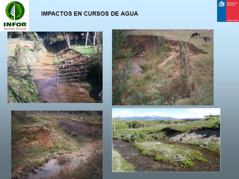 CONSERVACIÓN DEL AGUA ZONAS DE MANEJO DE CAUCE Los árboles, arbustos y pastos presentes en esta zona sirven como mecanismo estabilizador de sus riberas.