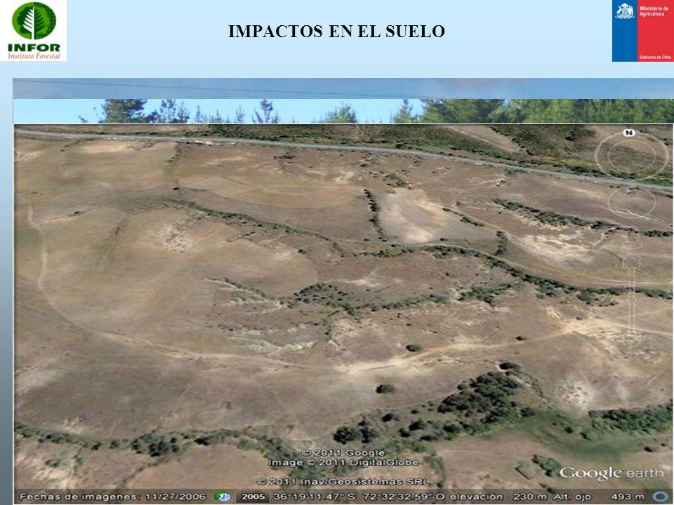 ZONAS DE MANEJO DE CAUCE Uso de multiespecies leñosas (árboles y arbustos) y pastos.