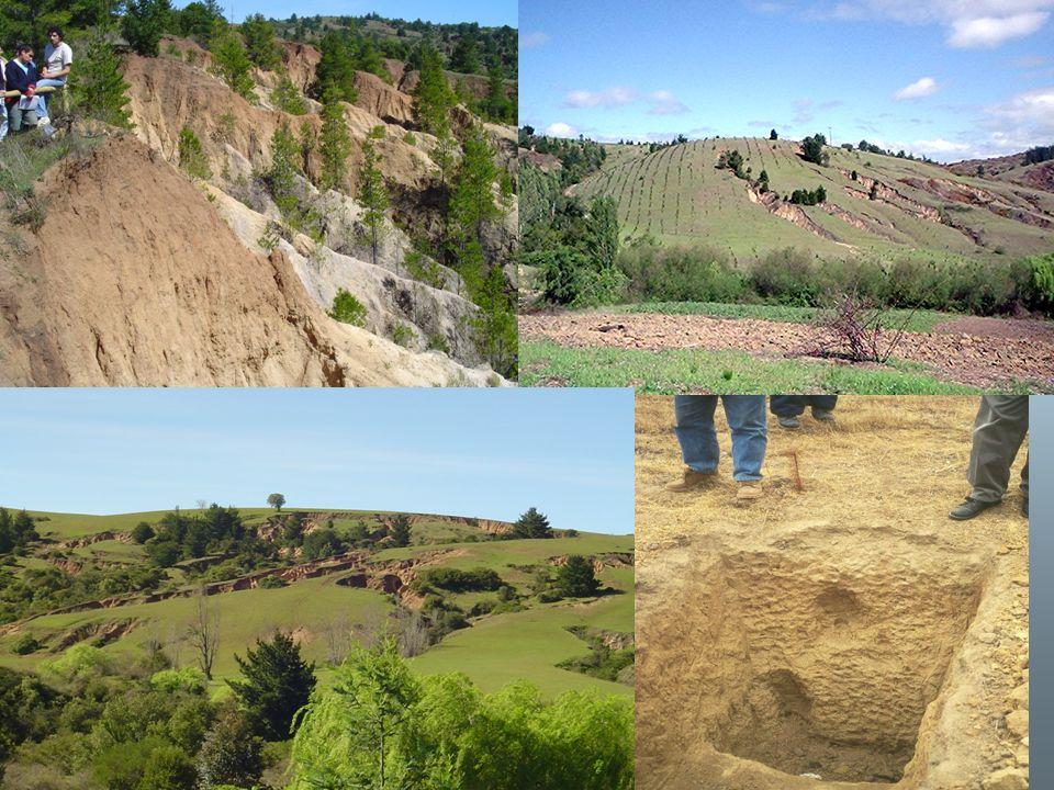 APL ACCIÓN 4.3 Promover prácticas de mejoramiento de suelos en zonas degradadas, a través de los programas de fomento de recuperación de suelos degradados.