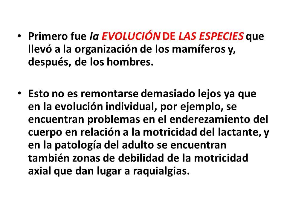 Primero fue la EVOLUCIÓN DE LAS ESPECIES que llevó a la organización de los mamíferos y, después, de los hombres. Esto no es remontarse demasiado lejo