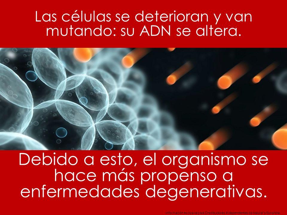 Información exclusiva para Distribuidores Independientes de Nature´s Sunshine.. Las células se deterioran y van mutando: su ADN se altera. Debido a es