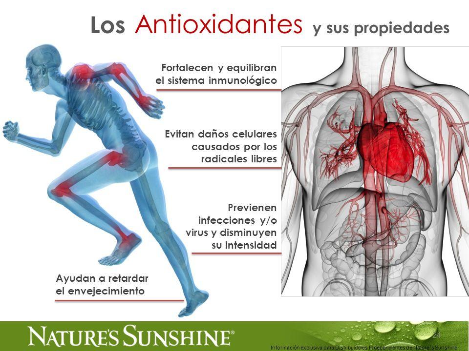 24 Información exclusiva para Distribuidores Independientes de Nature´s Sunshine.. Los Antioxidantes y sus propiedades Fortalecen y equilibran el sist