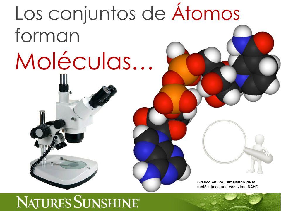 Los conjuntos de Átomos forman Moléculas… Gráfico en 3ra. Dimensión de la molécula de una coenzima NAHD
