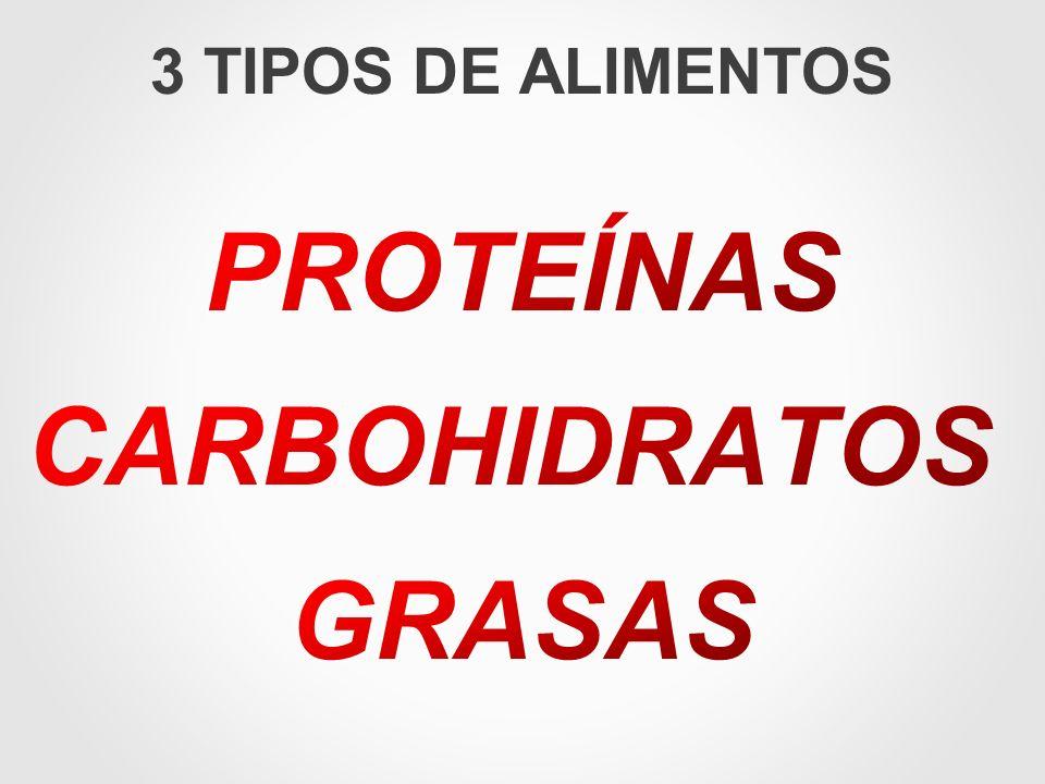 3 TIPOS DE ALIMENTOS