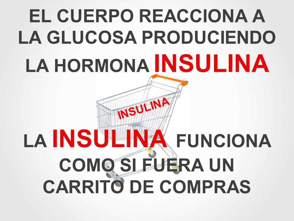 INSULINA LA INSULINA FUNCIONA COMO SI FUERA UN CARRITO DE COMPRAS EL CUERPO REACCIONA A LA GLUCOSA PRODUCIENDO LA HORMONA INSULINA