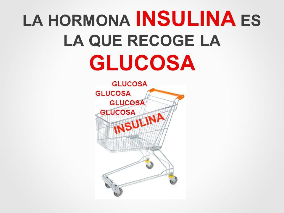 LA HORMONA INSULINA ES LA QUE RECOGE LA GLUCOSA GLUCOSA