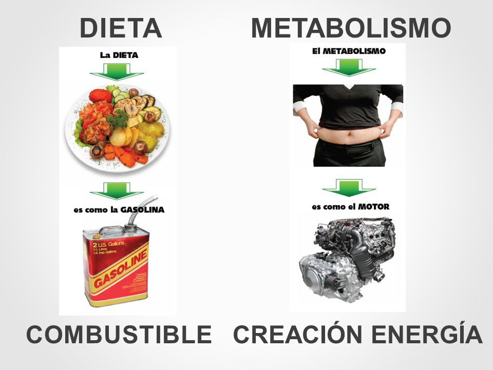 DIETA COMBUSTIBLE METABOLISMO CREACIÓN ENERGÍA