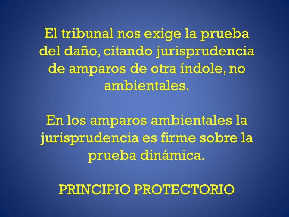 El tribunal nos exige la prueba del daño, citando jurisprudencia de amparos de otra índole, no ambientales.