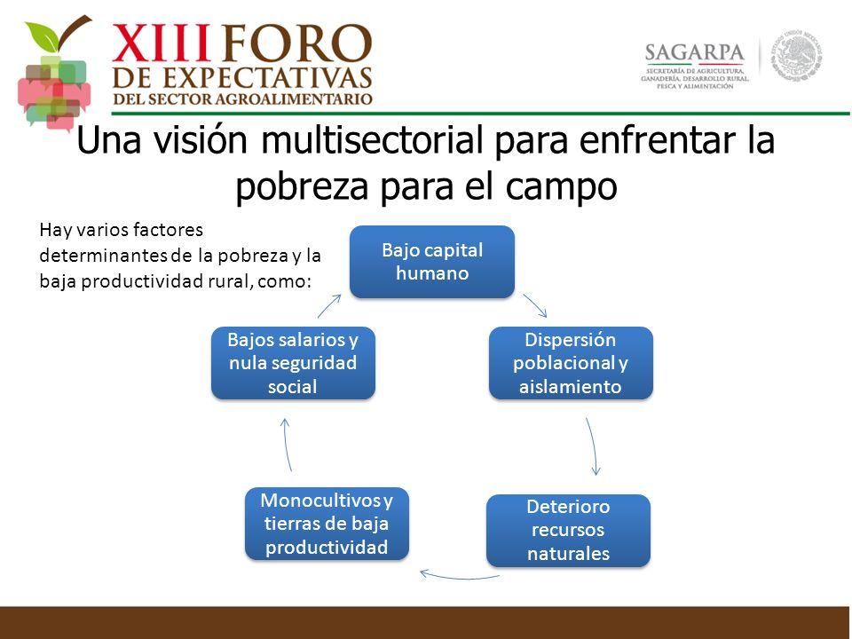 Bajo capital humano Dispersión poblacional y aislamiento Deterioro recursos naturales Monocultivos y tierras de baja productividad Bajos salarios y nu