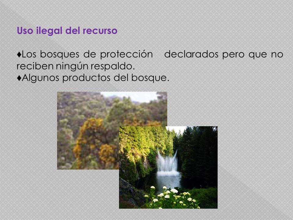 Uso ilegal del recurso Los bosques de protección declarados pero que no reciben ningún respaldo. Algunos productos del bosque.