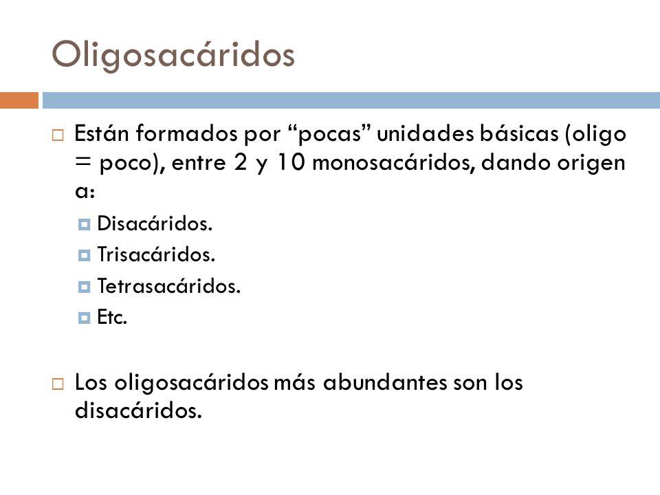 Oligosacáridos Están formados por pocas unidades básicas (oligo = poco), entre 2 y 10 monosacáridos, dando origen a: Disacáridos. Trisacáridos. Tetras