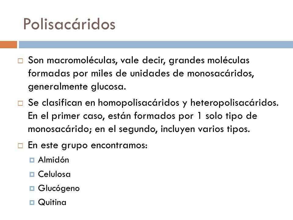 Polisacáridos Son macromoléculas, vale decir, grandes moléculas formadas por miles de unidades de monosacáridos, generalmente glucosa. Se clasifican e