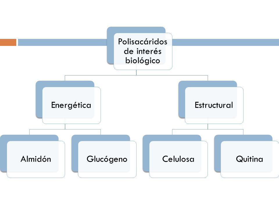 Polisacáridos de interés biológico EnergéticaAlmidónGlucógenoEstructuralCelulosaQuitina