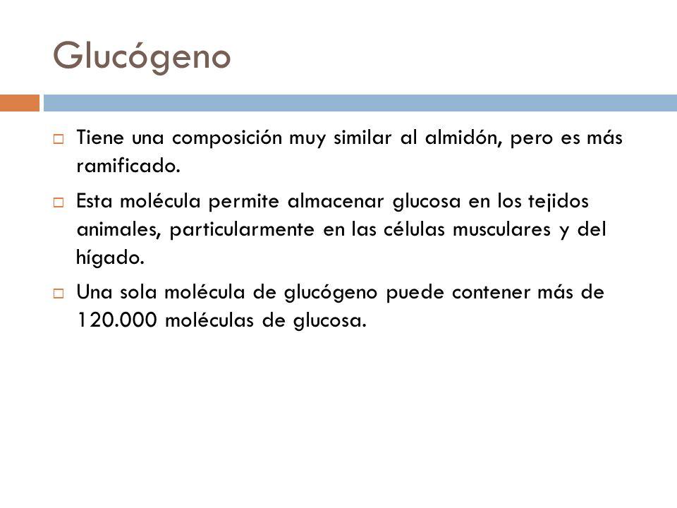 Glucógeno Tiene una composición muy similar al almidón, pero es más ramificado. Esta molécula permite almacenar glucosa en los tejidos animales, parti