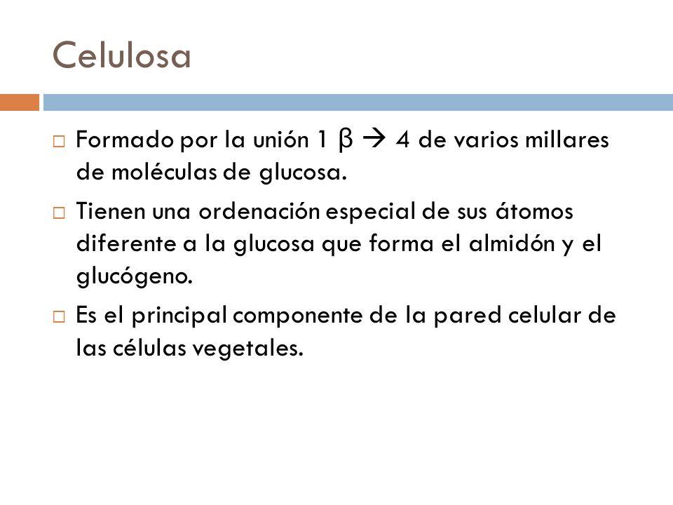 Celulosa Formado por la unión 1 β 4 de varios millares de moléculas de glucosa. Tienen una ordenación especial de sus átomos diferente a la glucosa qu