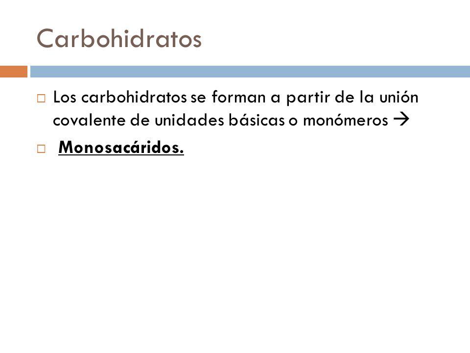 Carbohidratos Los carbohidratos se forman a partir de la unión covalente de unidades básicas o monómeros Monosacáridos.