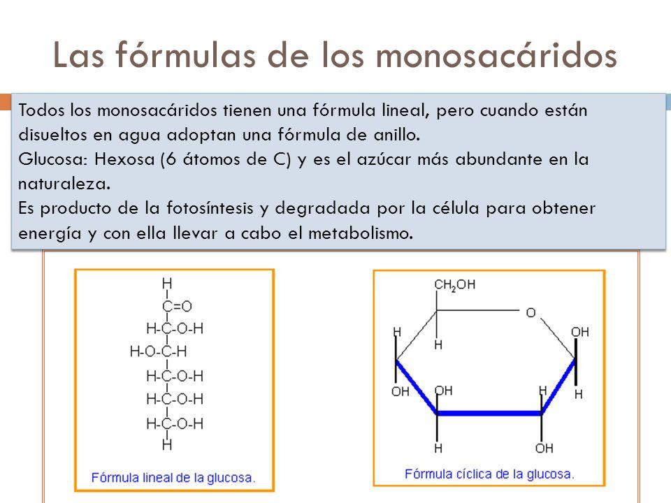 Las fórmulas de los monosacáridos Todos los monosacáridos tienen una fórmula lineal, pero cuando están disueltos en agua adoptan una fórmula de anillo