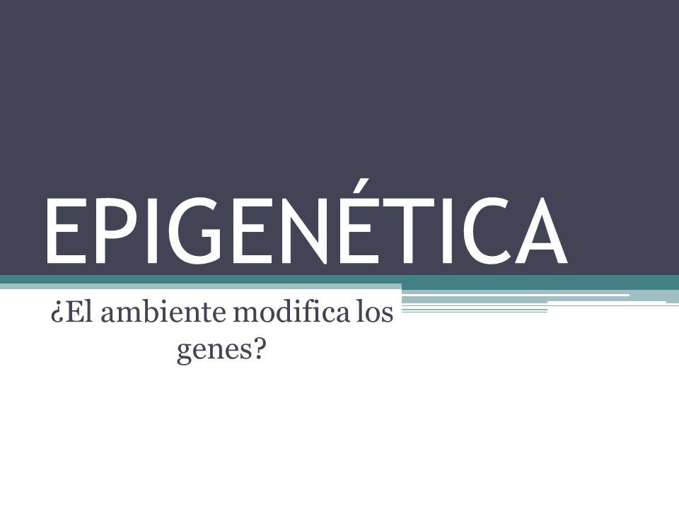 EPIGENÉTICA ¿El ambiente modifica los genes?