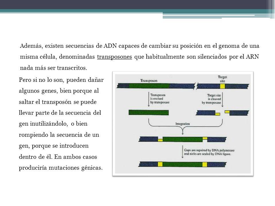 Además, existen secuencias de ADN capaces de cambiar su posición en el genoma de una misma célula, denominadas transposones que habitualmente son sile