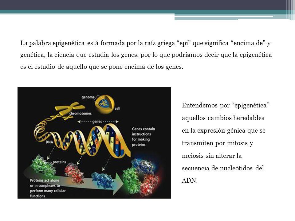 Entendemos por epigenética aquellos cambios heredables en la expresión génica que se transmiten por mitosis y meiosis sin alterar la secuencia de nucl