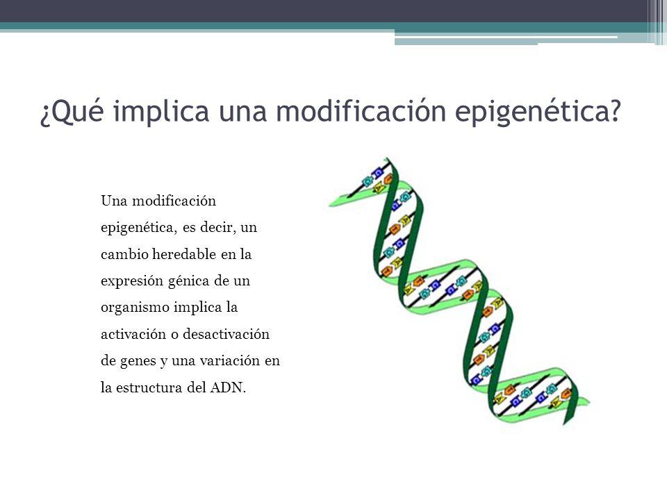 ¿Qué implica una modificación epigenética? Una modificación epigenética, es decir, un cambio heredable en la expresión génica de un organismo implica
