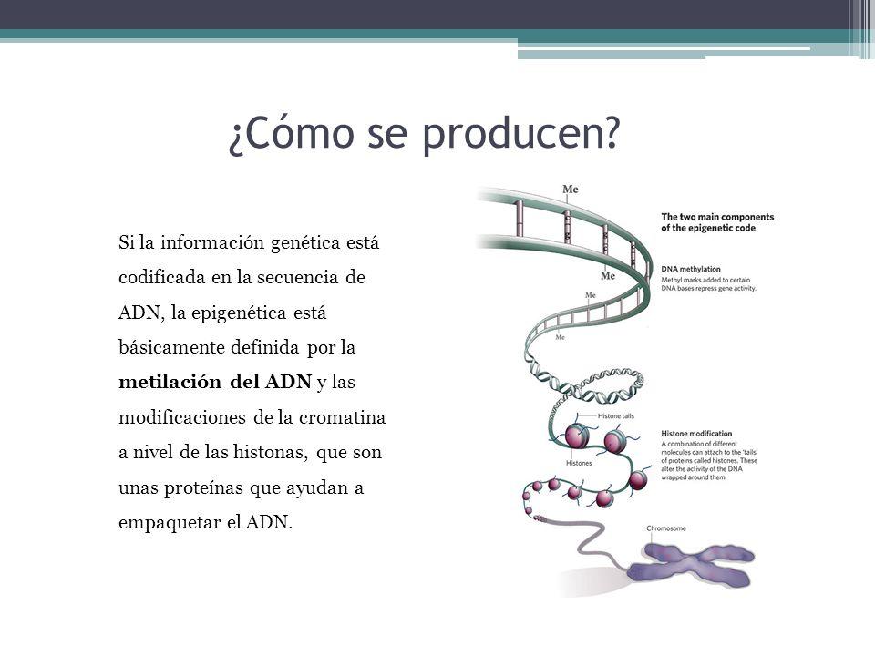 ¿Cómo se producen? Si la información genética está codificada en la secuencia de ADN, la epigenética está básicamente definida por la metilación del A
