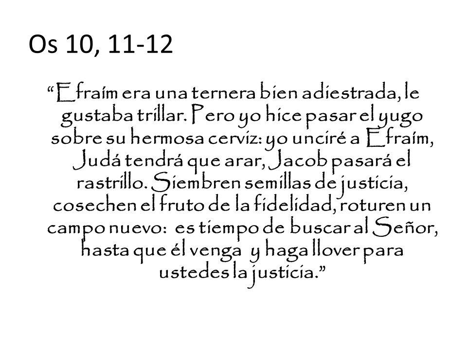 Os 10, 11-12 Efraím era una ternera bien adiestrada, le gustaba trillar. Pero yo hice pasar el yugo sobre su hermosa cerviz: yo unciré a Efraím, Judá